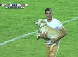 Dog Invades Football Pitch, Demands Cuddles From Players