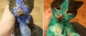 CATS CAT VIDEO CAT RESCUE ANIMAL CRUELTY SMURF AND