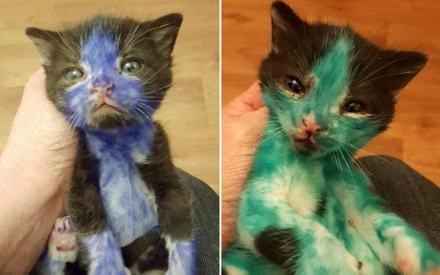 Kittens Found Covered In Ink May Have Been 'Bait' In Cruel Blood
