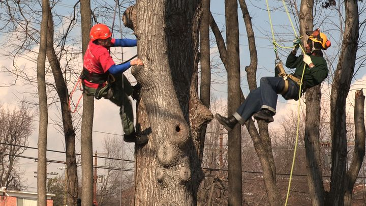 Michael Samuels and another Green Corps member scale a tree as they work to revitalize a park in Washington D.C.