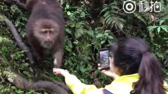 A monkey steals a cellphone.