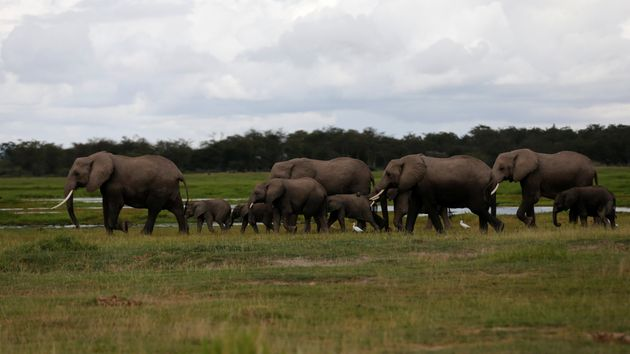 A family of elephants walks in Amboseli National Park, southeast of