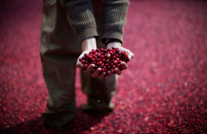 An employee of the Ocean Spray company holds cranberries as he stands in a pool of some 2,000 pounds of floating cranberries in 2014.