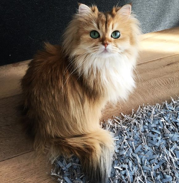 This May Be The Prettiest Cat In The World