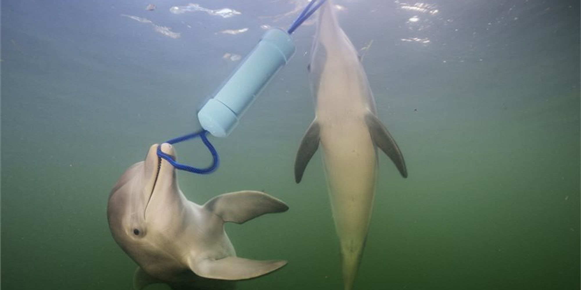 Dolphins Chatter More When Solving Tricky Tasks