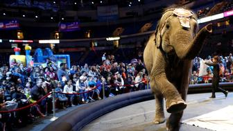 """An elephant performs in the pre-show entertainment at Ringling Bros and Barnum & Bailey Circus' """"Circus Extreme"""" show at the Mohegan Sun Arena at Casey Plaza in Wilkes-Barre, Pennsylvania, U.S., April 29, 2016. REUTERS/Andrew Kelly"""