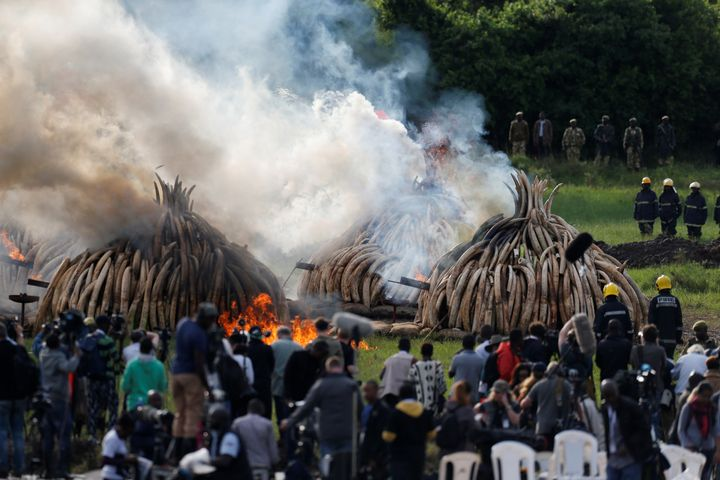 A general view shows part of 105 tonnes of elephant tusk ivory confiscated from smugglers and poachers burning at Nairobi National Park near Nairobi, Kenya, April 30,
