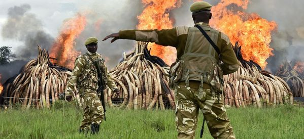 Over £100 Million Worth Of Ivory Burnt To Dust In Anti-Poaching Protest