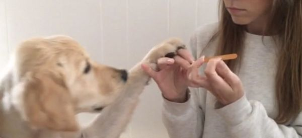 Glamorous Pup Won't Let A Manicure Happen Without Her