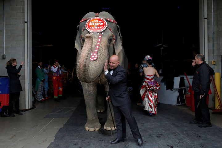 Circus performer Tabayara Maluenda pats an elephant after leading it in the introduction for its final show for the Ringling