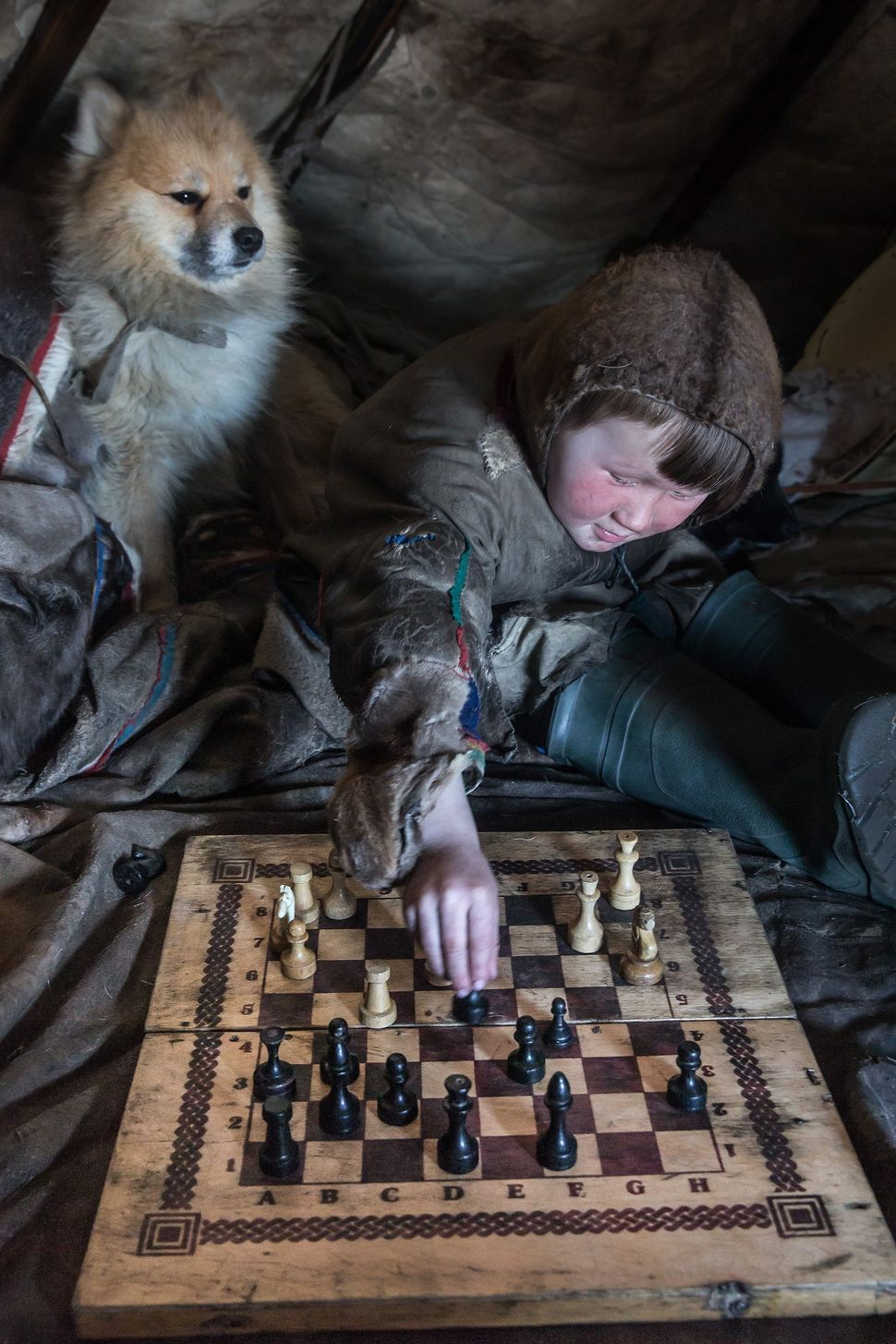 A Nenet kid plays chess as his animal is seen next to him in his shelter, 150 km from the town of Salekhard, Yamalo-Nenets Au