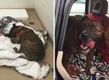 Rescue Dog Who Cried For Hours At Shelter Finally Gets Adopted