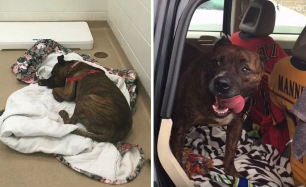 Rescue Dog Who Cried For Hours Finally Gets