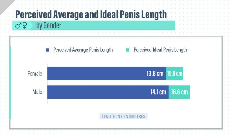 The length of a penis
