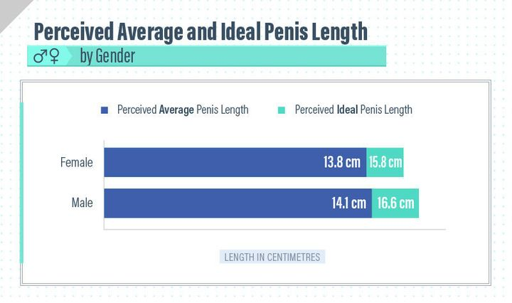 Average Penis Size For Males 84
