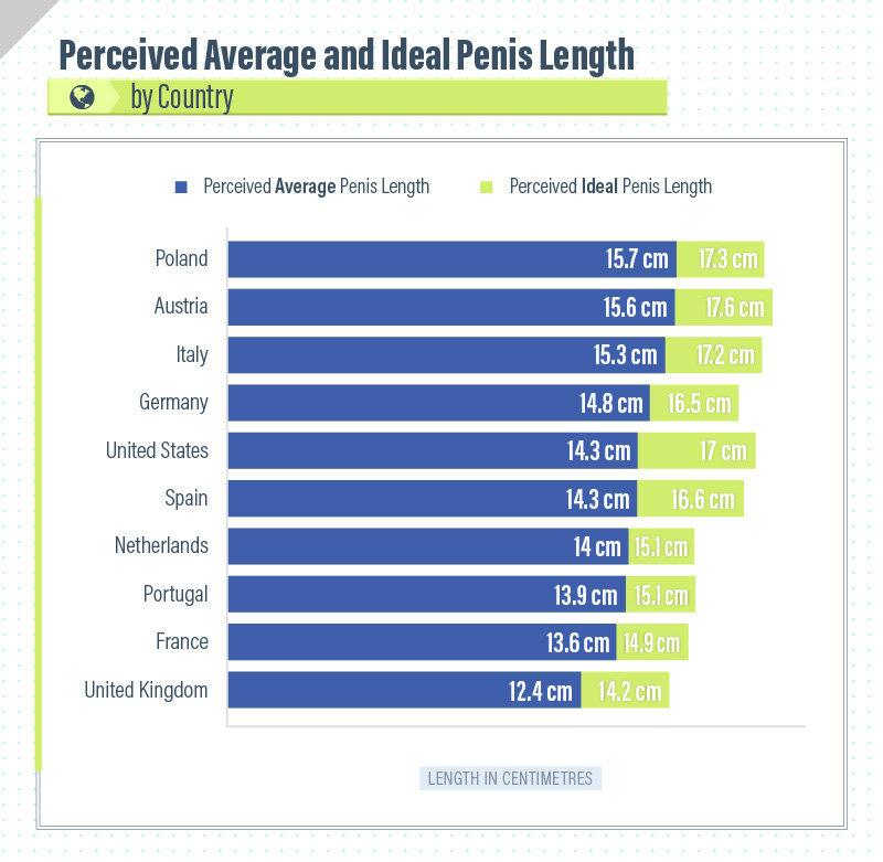 Average size of male genitalia