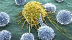 Cancer-Killing Antibody Discovery Hailed As 'Exciting' By