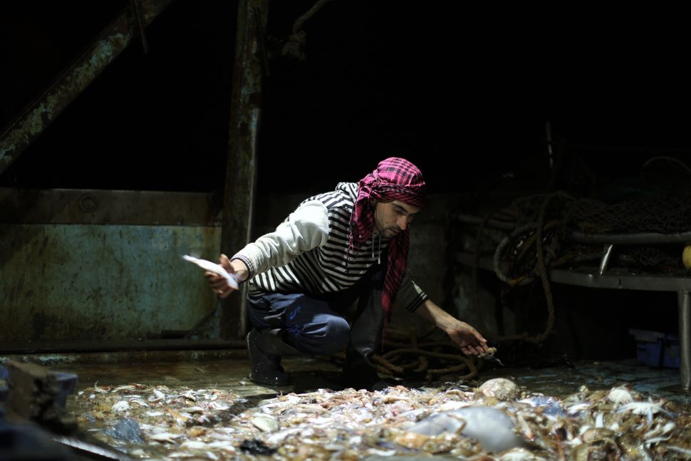Mohamed Nowaije collects fish on the ship while out at sea.
