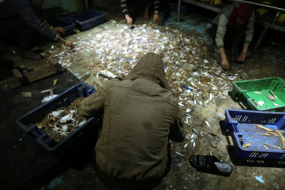 Palestinian fishermen collect and sort fish during the night on the Gaza seas.