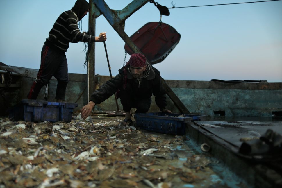 Palestinian fishermanMohamed Nowaije collectscrabs in the early morning on the deck of the ship.