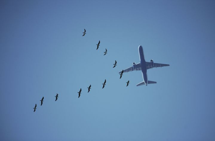 Birds pose a threat to aircraft, especially during takeoffs and landings, but researchers say they've figured out an effectiv