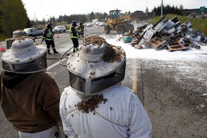 Beesactually have a history of buzzing freein driving accidents. Here beekeepers wait to start clearing the scene