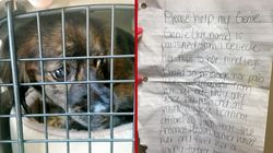 Paralysed Dog Found Near Shelter With Crushing Note From