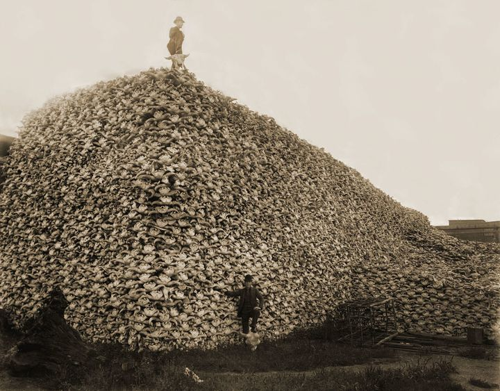 "A&nbsp;mountain of <a href=""https://en.wikipedia.org/wiki/American_bison"">American bison</a> skulls waiting to be ground for"