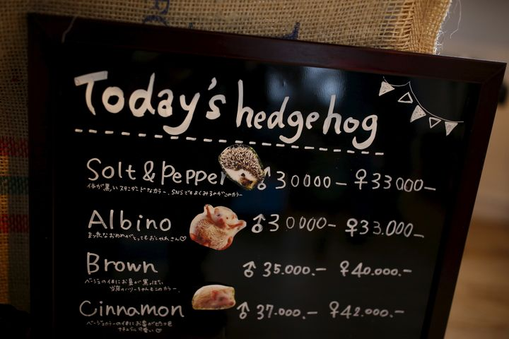"""A """"menu board"""" lets visitors know which kinds of hedgehogs are available for snuggling."""