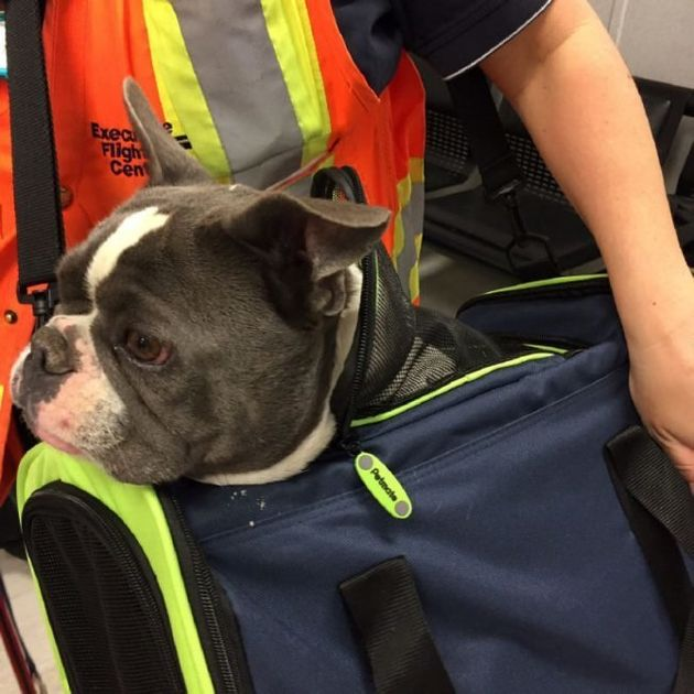 Fort McMurray Fires: Pets Evacuated By Kind-Hearted
