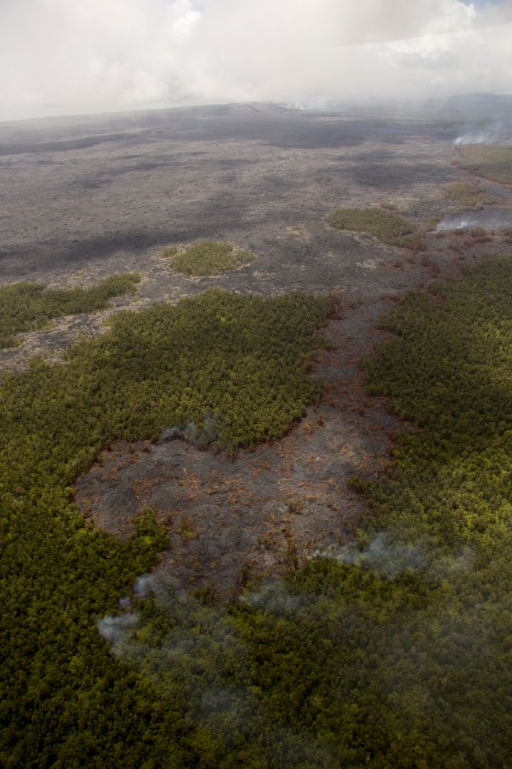 A small lobe of lava cuts through the forest in this USGS photo taken on March 25.