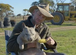 Pete The Farting Wombat Eats Corn And Lets Rip In TV Interview