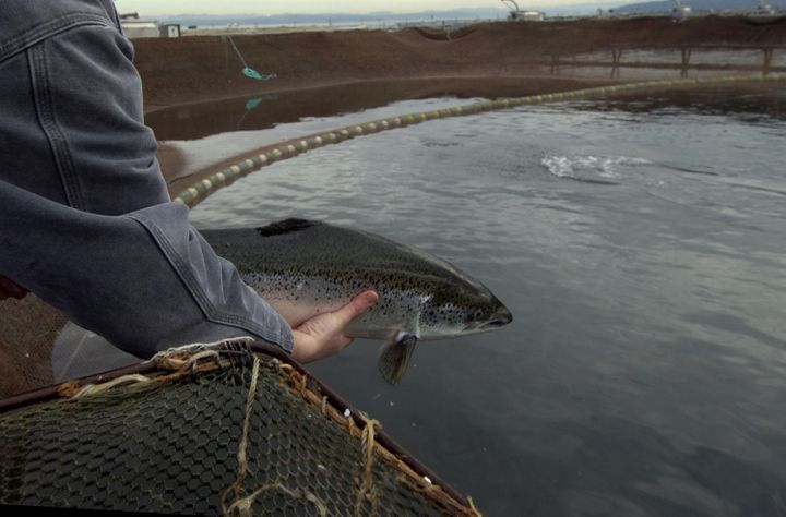 A studyon salmon populations is one of the papers that Greenpeace has taken issue with.