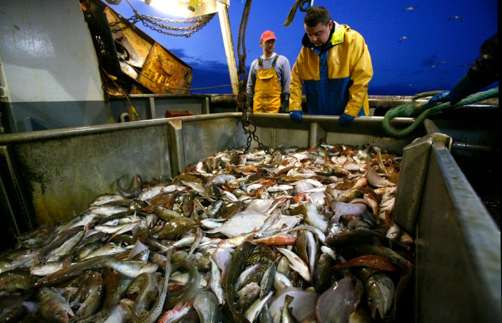 Greenpeace bills trawling as a damaging fishing practice that is depleting fish stores.