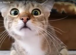 This Cat Watching A Horror Movie Is Viral Video Of The Year