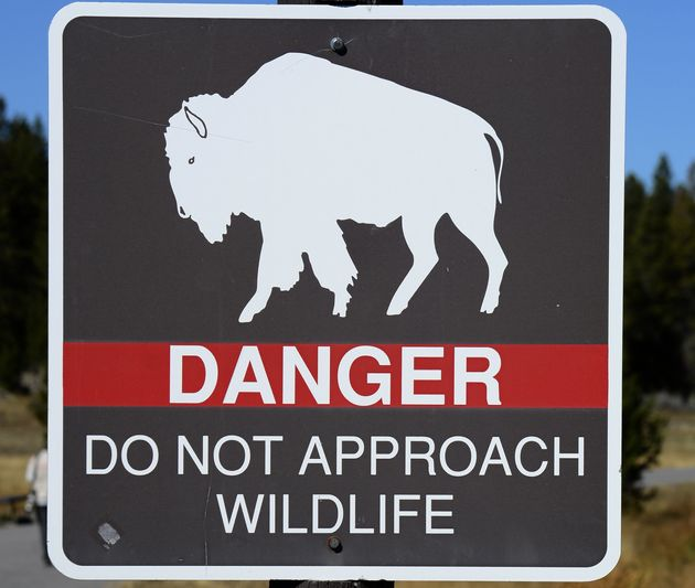 A sign in Yellowstone National Park warns visitors to keep away from wildlife. Two tourists allegedly...
