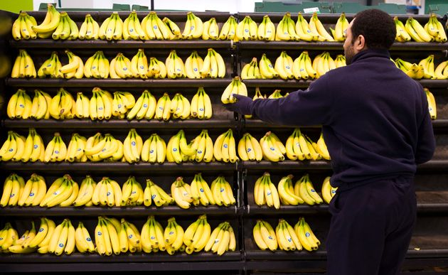 Bananas in bunches of various sizes in