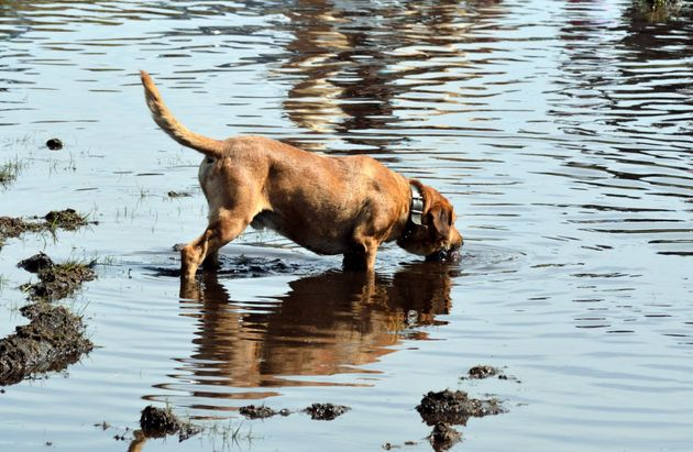 Three dogs have died after drinking water from a lake in Kent (file