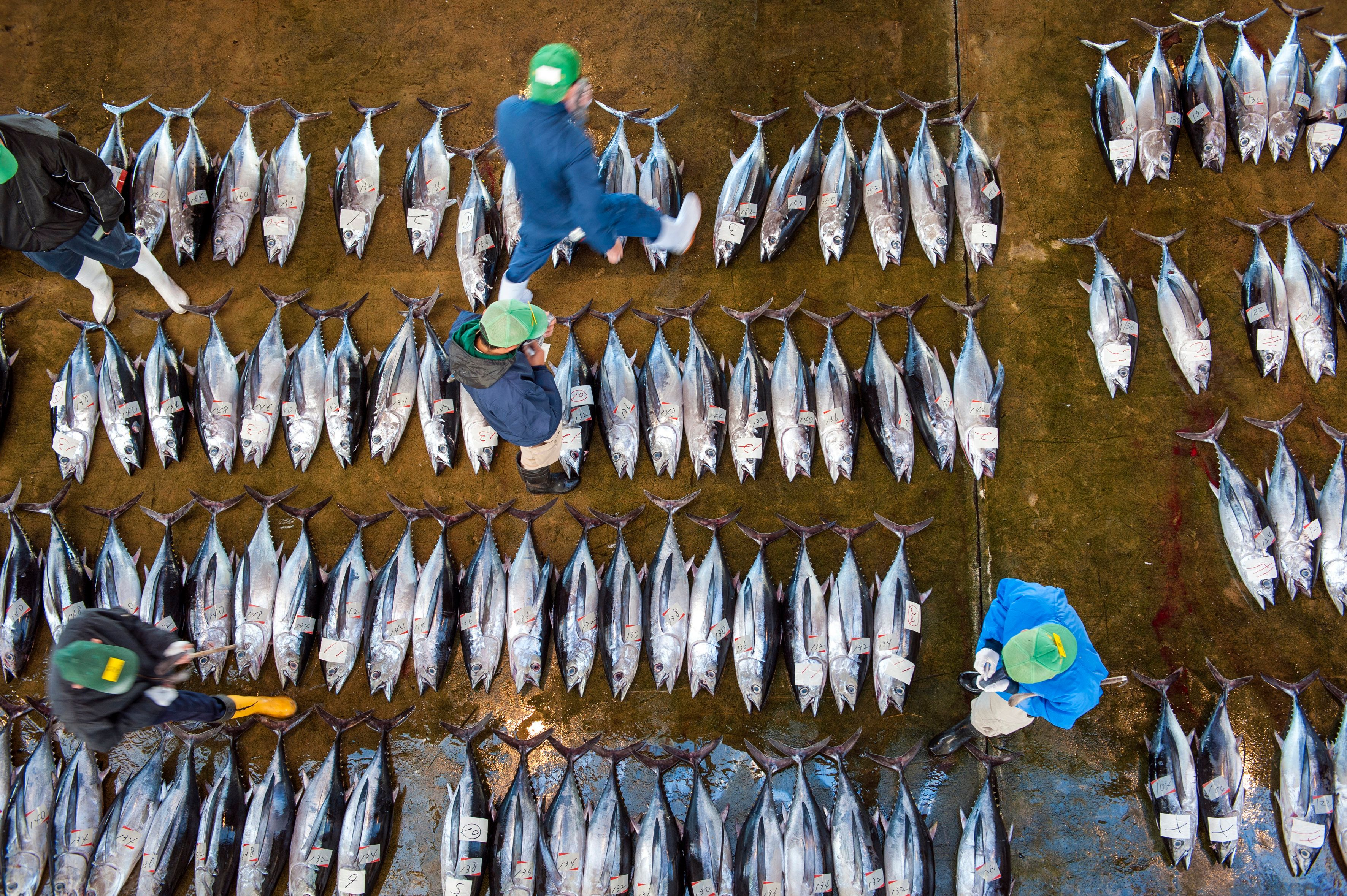 Sustainable Seafood Boom Brings Hope To An Overfished