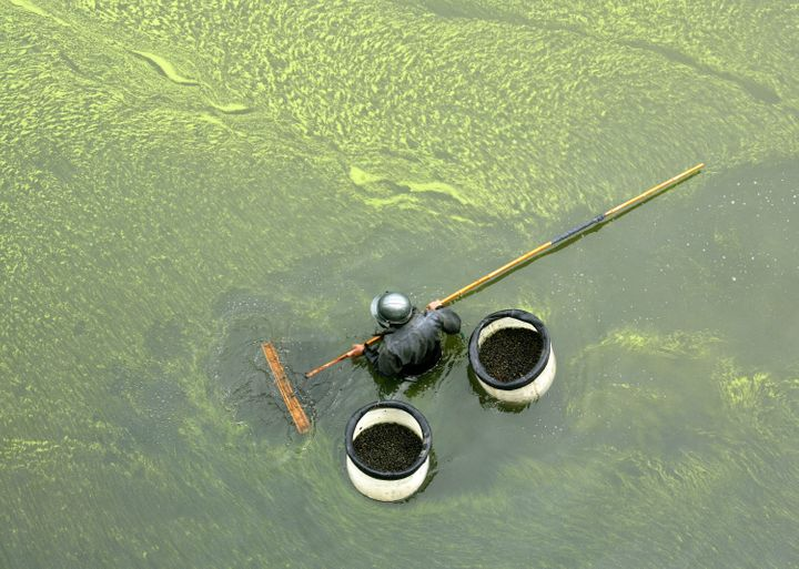 Runoff from farms can cause algae blooms that kill marine animals.
