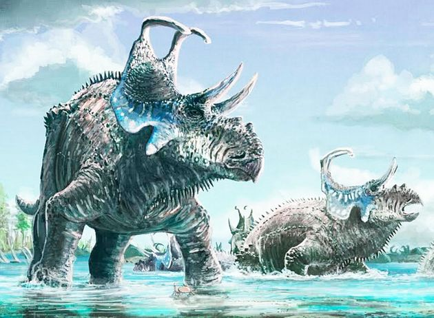 New Horned Dinosaur Species Unearthed In