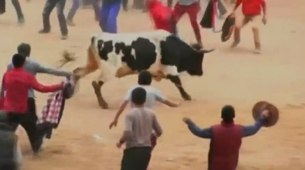 Eight people were injured during the first day of the Toro Chutay bullfighting festival in