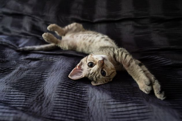 New York Vets Lobby To Ban The Declawing Of Cats Right