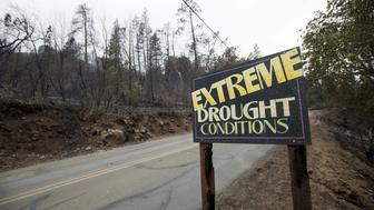 A sign is seen among trees that were burned as the Valley Fire whipped through Middleton, California, September 14, 2015. The Northern California wildfire ranked as the most destructive to hit the drought-stricken U.S. West this year has killed a woman and burned some 400 homes to the ground, fire officials said on Monday, and they expect the property toll to climb.  REUTERS/Noah Berger