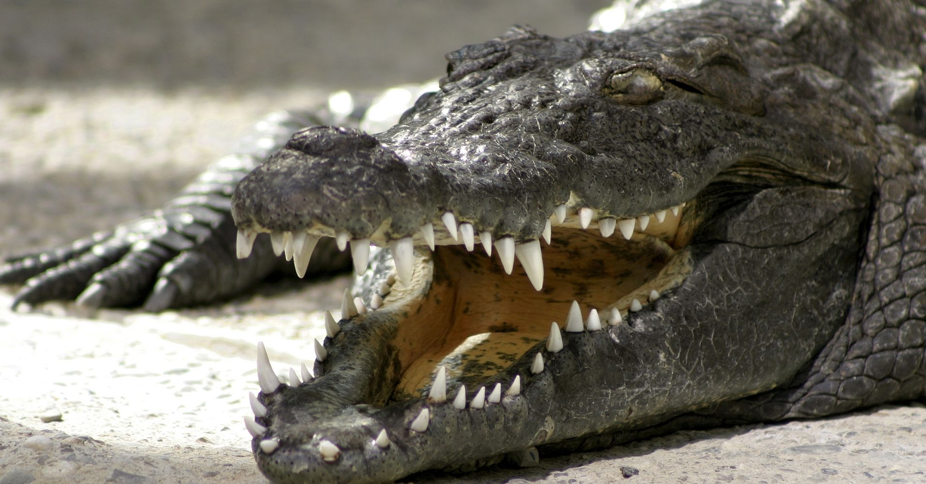 alligator divorced singles Single married divorced how and when to claim social security there are hundreds, if not thousands, of ways to claim social security.