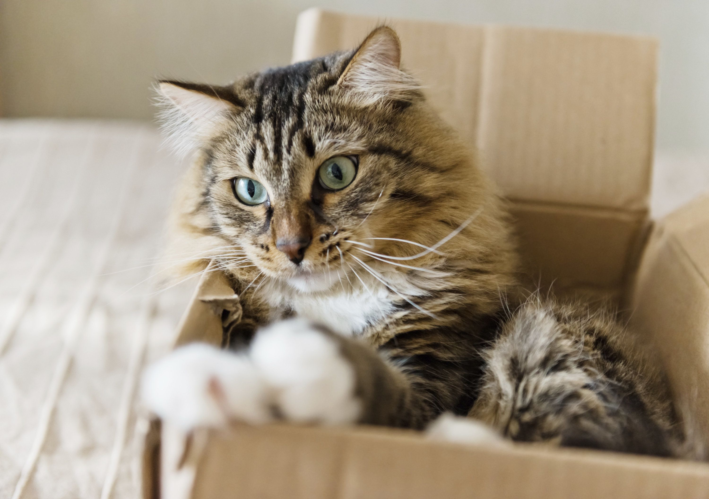 You can take a cat out of the box but -- well, actually you probably shouldn't try it.
