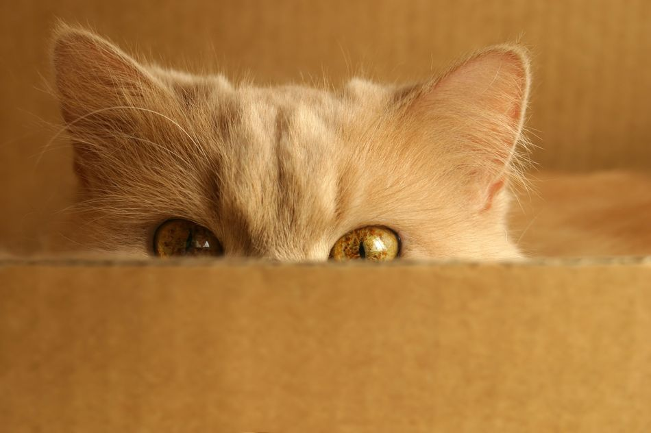 Huffpost Video Cats In Boxes