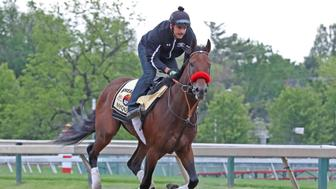 May 19, 2016; Baltimore, MD, USA; Kentucky Derby winner Nyquist during Thursday morning workouts prior to the Preakness Stakes at Pimlico Race Course. Mandatory Credit: Mitch Stringer-USA TODAY Sports