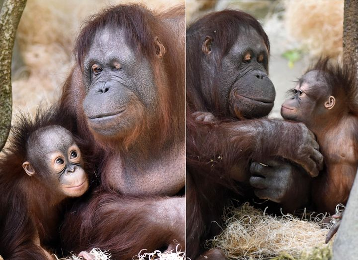The mother of four also served as a surrogate to two infants including this one named Kecil, pictured here last year.