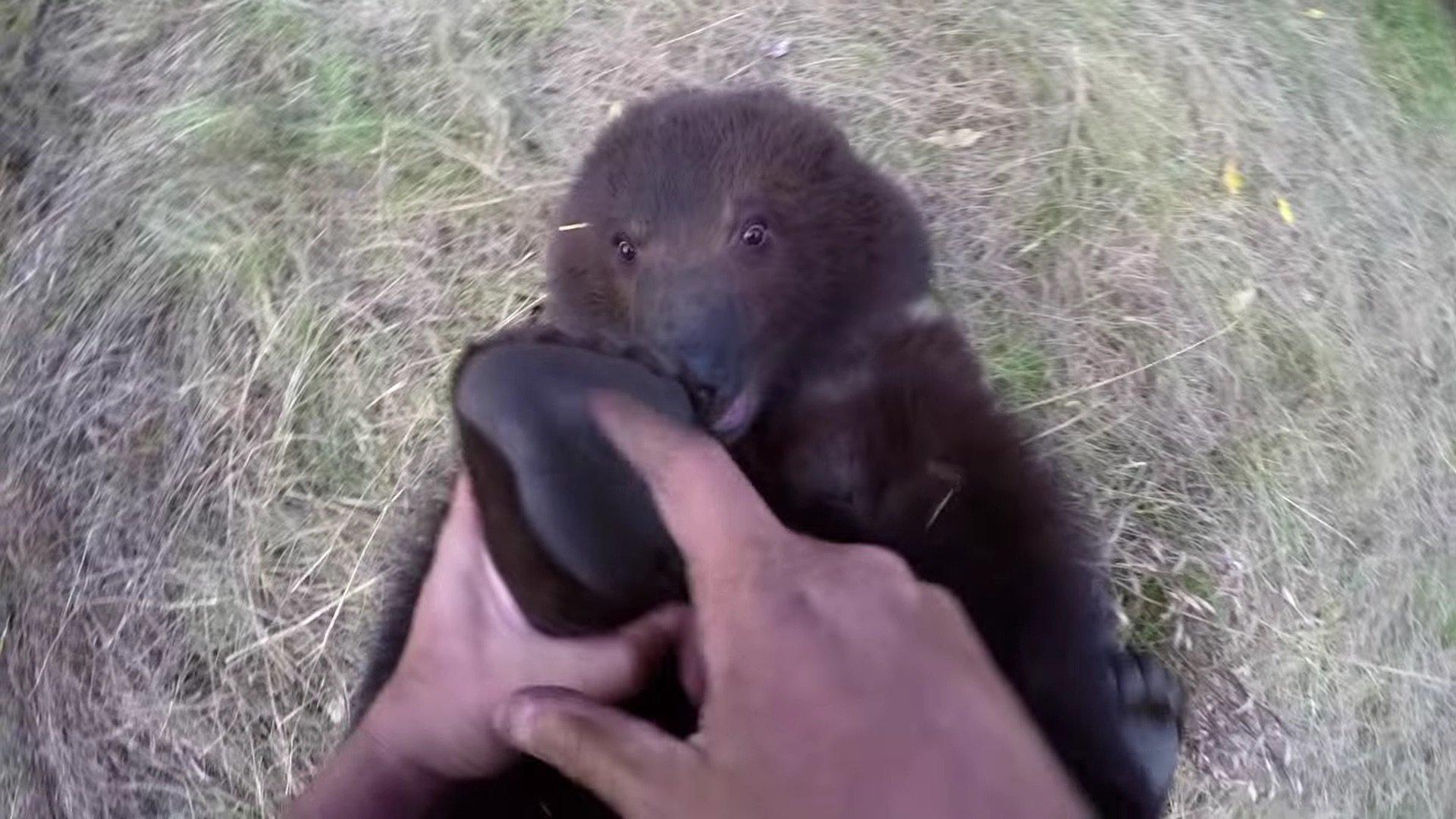 Bella the grizzly bear cub.